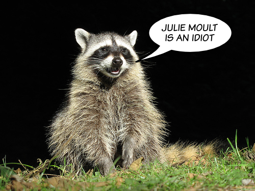 'Julie Moult is an idiot' says raccoon