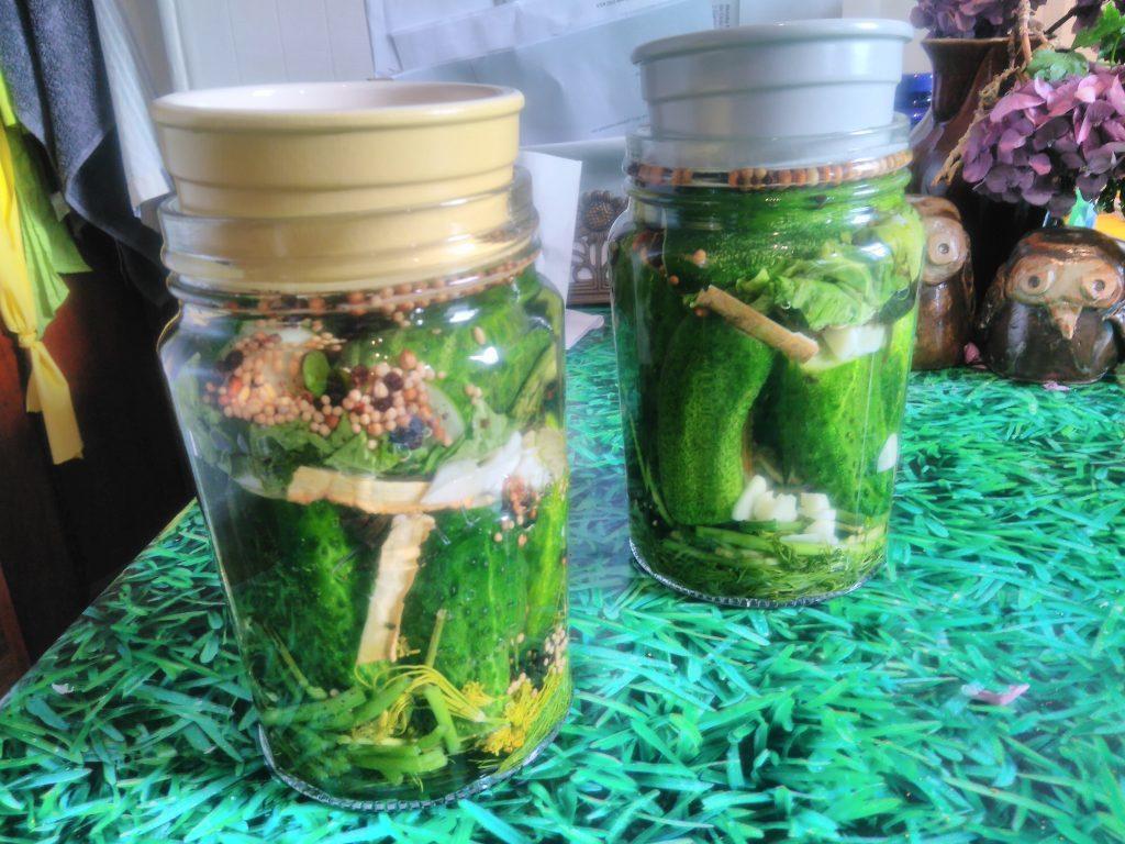 Russian brine pickled gherkins