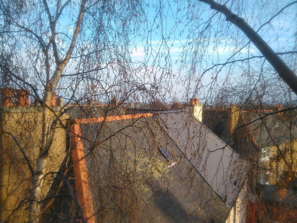 View from the top of the silver birch before pruning